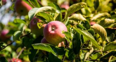 Fall Fun: Apple Picking