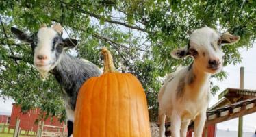 Pumpkin Patch & Fall Fun @ Temple Hall Farm