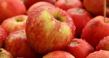 Fresh Air Fun: Apple Picking