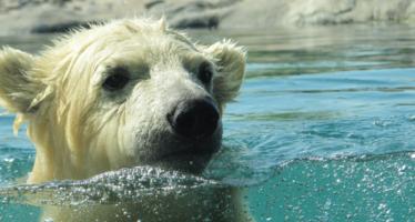 6+ Reasons to Enjoy an Icy Swim!