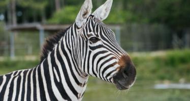 Drive-Thru Zoo at Leesburg Animal Park