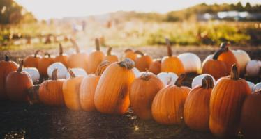 Fall Festivals & Special Events