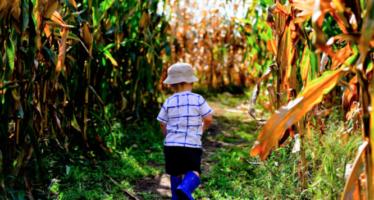 Fall-Inspired Fun — Visit a Corn Maze!