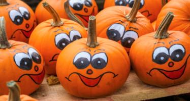 Pumpkin Patches in the DMV